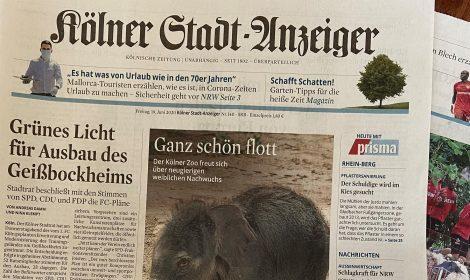 1. FC Köln   Rat der Stadt Köln hat entschieden